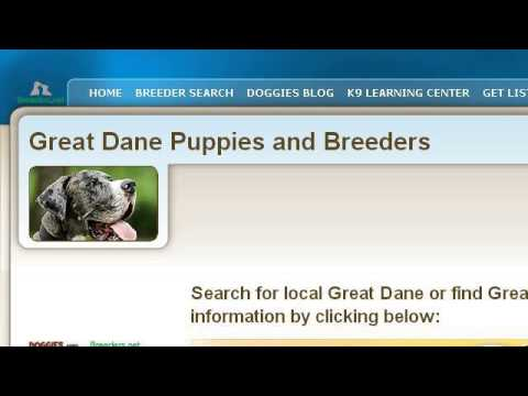 How-To Find A Reputable Breeder Of Great Danes