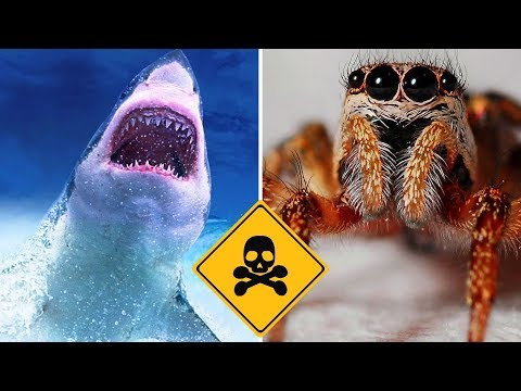 Top 10 Most Dangerous Predators On Earth - Part 2 Vlog#21 by HooplakidzLab