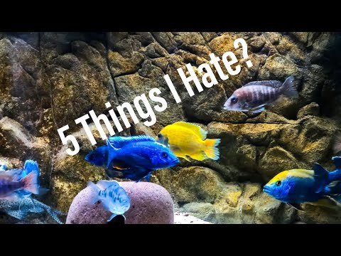 5 Things I Hate About African Cichlids