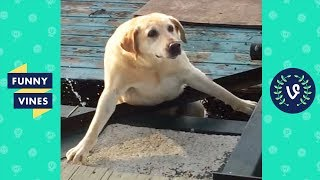 TRY NOT TO LAUGH - Cute FUNNY ANIMALS | Funny Videos January 2019