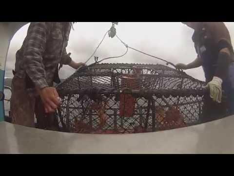 Crayfishing in Fiordland NZ