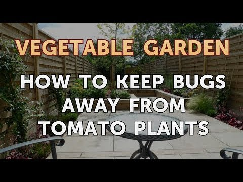 How to Keep Bugs Away From Tomato Plants