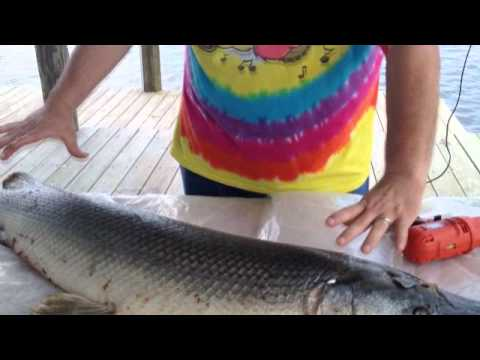 How To Catch, Clean, & Prepare Alligator Gar : River Monsters