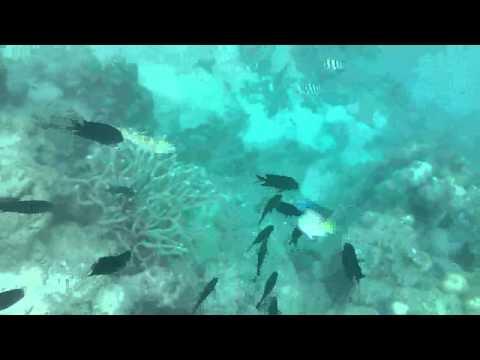 Snorkeling @ Pandan Island 2