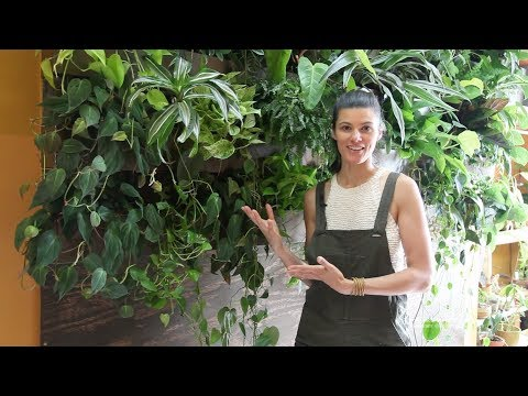 Ep 028: DIY Sub-irrigated Green Wall - Plant One On Me