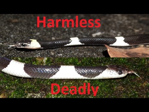 Herping | This Mistake Could Kill You