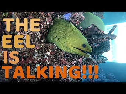 MORAY EEL IS TRYING TO SAY SOMETHING!!!