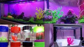 Fish Shop Fish Price Naaz Aquarium Kurla The Most Popular High