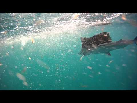 Marathon Fishing Trip 2012 - Light Tackle Sailfish - Part 2