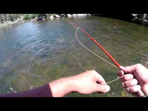 HighAF_Fishing TV (Subscribe) -  Eleven Mile Canyon Fly Fishing with thA Rod fAther