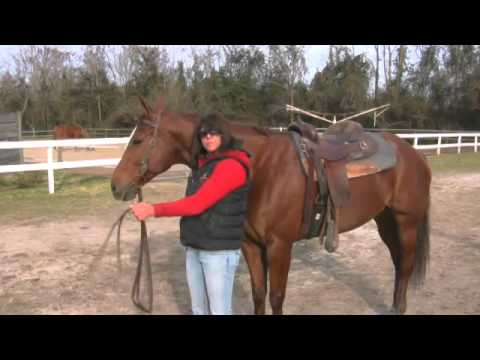 How to Train a Horse With Ground Work