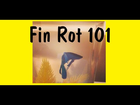 How To Cure Fin Rot: Noticing And Treating