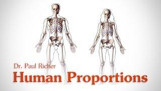 Human Figure Proportions Average Figures Dr Paul Richer