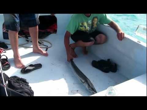 Catching a barracuda in Belize
