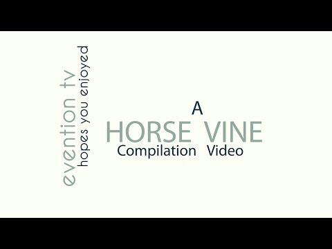 Evention Tv presents: A Horse Vine Compliation Video