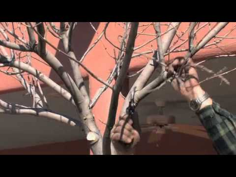 Tree Care: The Art of Pruning