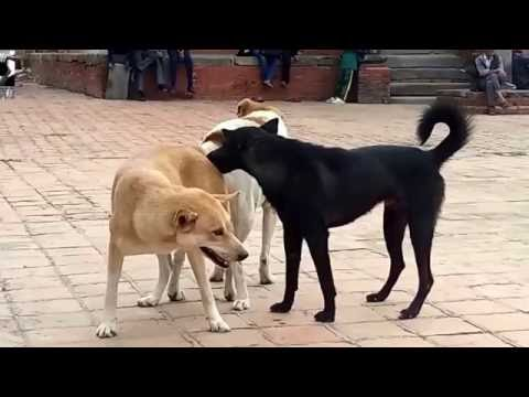 Xxx Mp4 Dog Sex OhYeah 3gp Sex