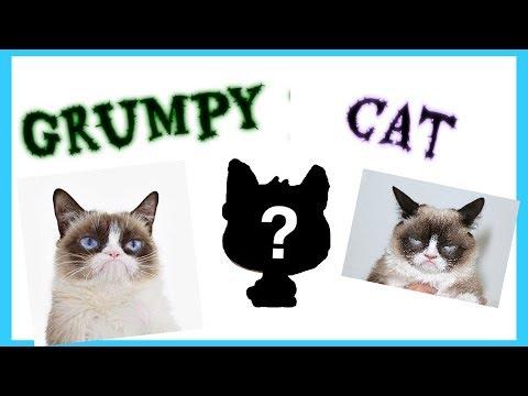 Customizing LPS Grumpy Cat