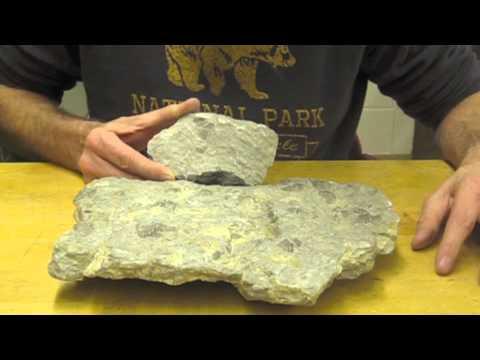 Identifying Fossiliferous Limestone