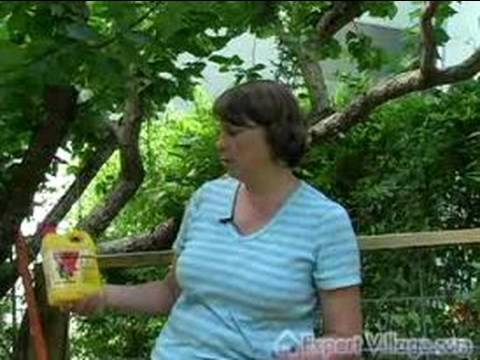 How to Care for Fruit Trees : Pest Control for Fruit Trees