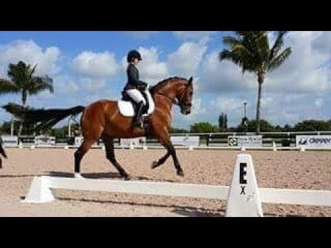 Equestrian Tips-Improve Your Dressage Scores!  20 Meter Circles