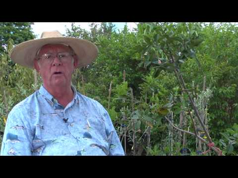 How to Grow Guava Trees