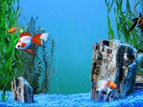 My (old) Windows XP fish aquarium screensaver (vid#2)