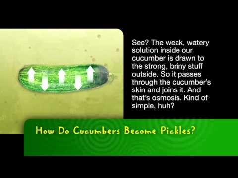 Bayer MSMS  |  How Do Cucumbers Become Pickles?