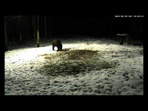 Szarvasos és vaddisznós vadetető frissítés és új videók