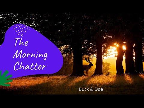 Morning Chatter: buck & doe
