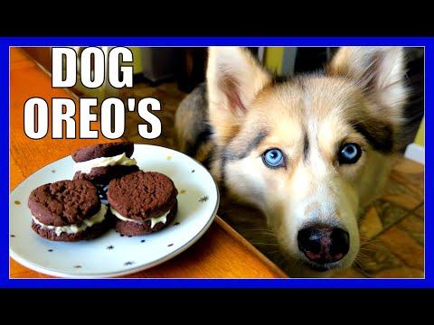 DIY OREO DOG COOKIES   Snow Dogs Snacks 50   DIY DOG TREATS OREOS