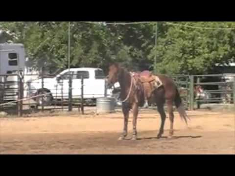 rope horse for sale in Clements CA