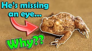 All About Deformities in Amphibians (and what causes them)