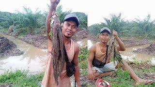 Gila Nih Orang Mancing Ikan Lele Banyak Sekali Dapatnya