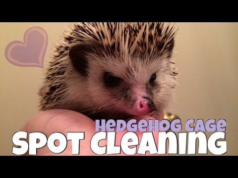 Hedgehog Cage Spot Cleaning Routine || Midwest Critter Nation