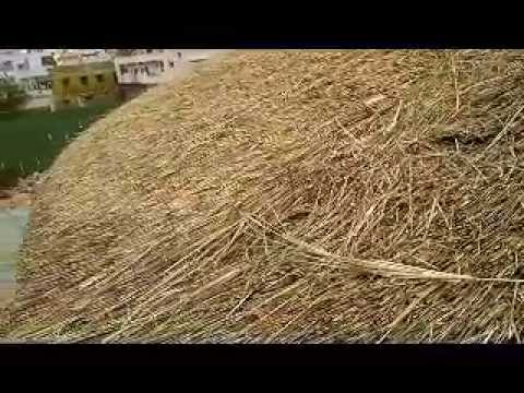 Cost of Thatch Roof in India