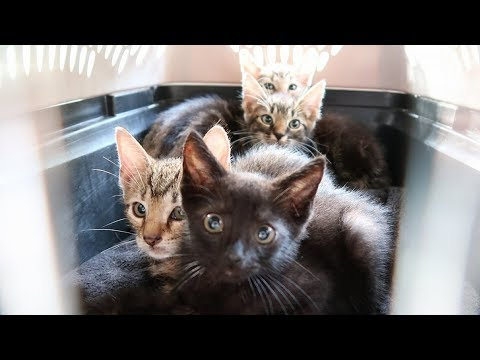4 Abandoned Kittens Rescued from Living inside a Tree