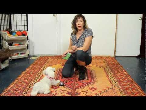 Ring a Bell Trick - Dog Training