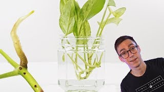 2 BEST Pothos Propagation Methods And WHY To Use Them