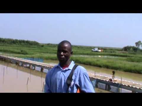 FINGERLING PREPARATION AND TRANSPORTATION - EXPLAINED