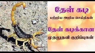 Download scorpion bite treatment in tamil | thel kadi vaithiyam| தேள் கடிக்கு முதலுதவி குறிப்புகள் Video
