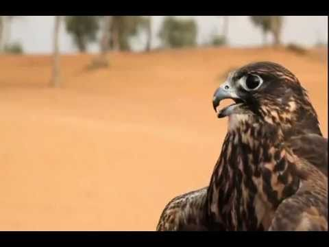 Training to be a falconer