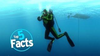 Top 5 Scuba Diving Facts