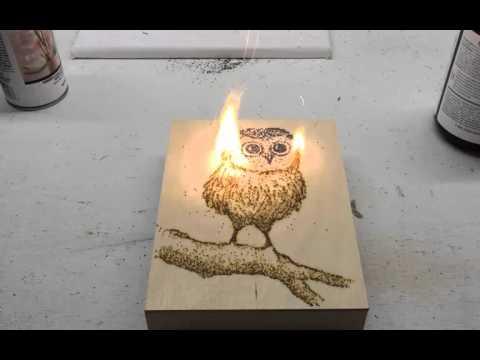 Baby Owl   Owl Art   Gunpowder Artwork