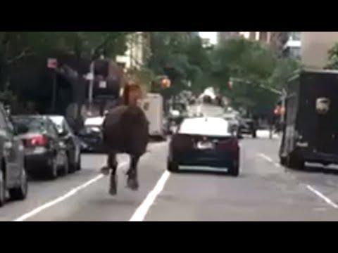 Loose HORSE IN NYC Runs Toward midtown TRAFFIC