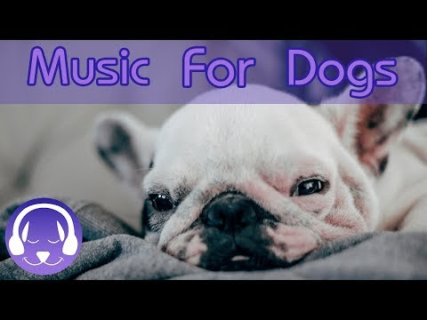 Pet Therapy Music to Help Dogs with Anxiety! De-Stress and Calm Your Dog with this Natural Remedy!