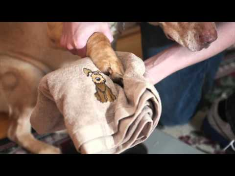 Unique Paw Washing Device