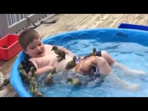 Kid Goes Swimming with a Bunch of Ducklings