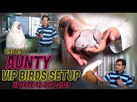 Xxx Mp4 Visited At Aunty VIP Birds Setup 2018 Jamshed Asmi Informative Channel In Urdu Hindi 3gp Sex