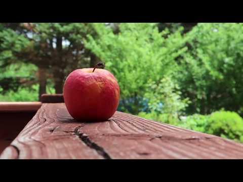torturing apples.